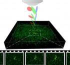 1. המחשה של המיקרוסקופ אותו בנינו במעבדה. על ידי שימוש בטכניקה מתקדמת, הנקראת מיקוד זמני, ניתן לדמות ביעילות ובמהירות איזורים גדולים בתרבית. כל נקודה בתרבית מצולמת 10 פעמים בשניה, מהירות המאפשרת לזהות כל שינוי בפעילות התאים.